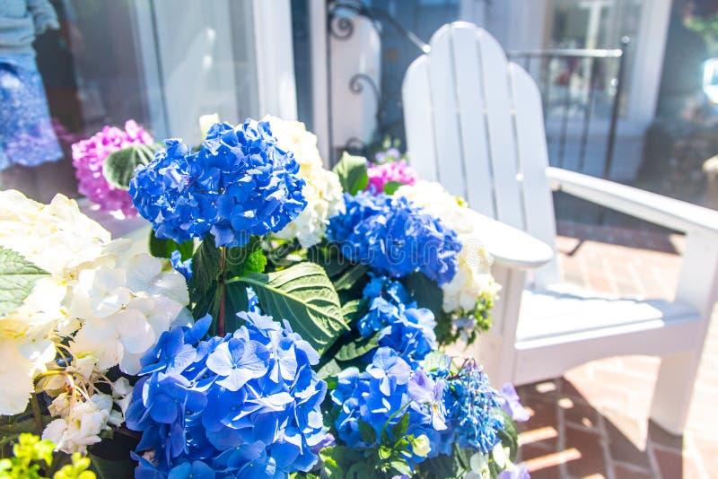 Завод гортензии со стульями городским Edgartown adirondack на винограднике Марта, Массачусетсе, США стоковые изображения rf