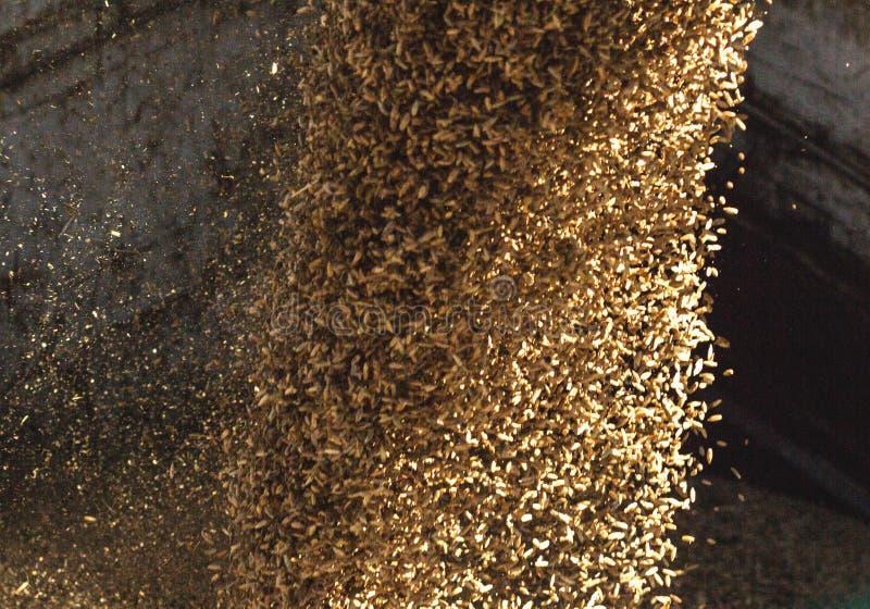 Завод для обрабатывать и хранить зерно, нагружая зерно в тело тележки, конец-вверх, урожай стоковая фотография rf