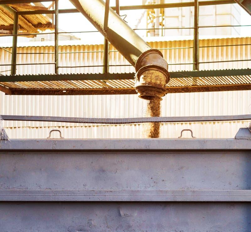 Завод для обрабатывать и хранить зерно, тележка нагружен с зерном, мозолью фабрики, концом-вверх стоковое изображение rf