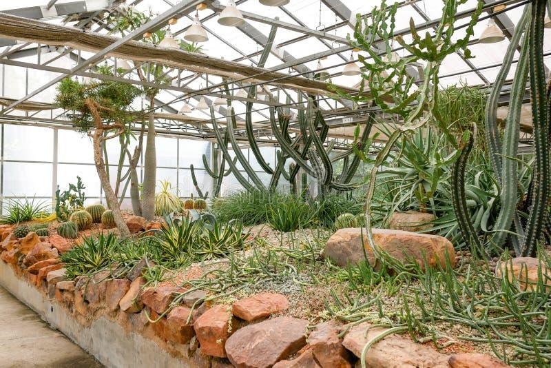 Завод кактуса суккулентный в стеклянном доме стоковое фото