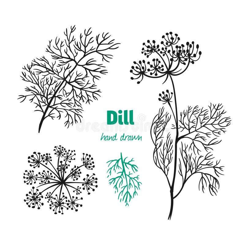 Завод, листья и цветки укропа vector иллюстрация нарисованная рукой бесплатная иллюстрация