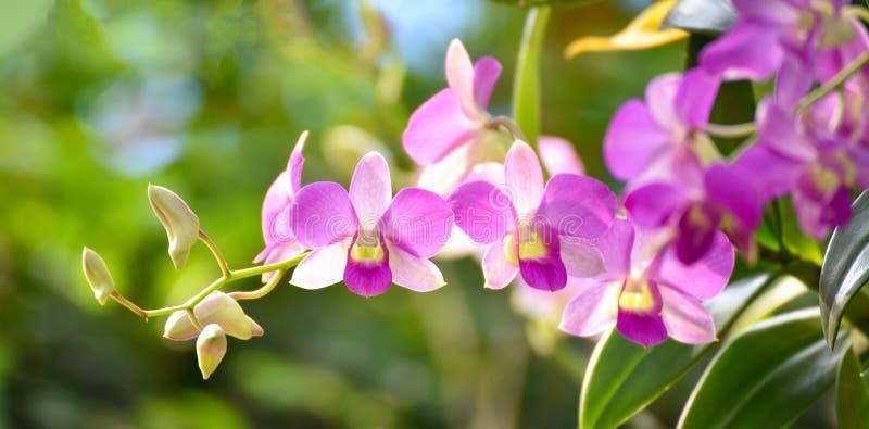 Завод орхидеи сумеречницы цветка Cymbidium орхидеи стоковое изображение