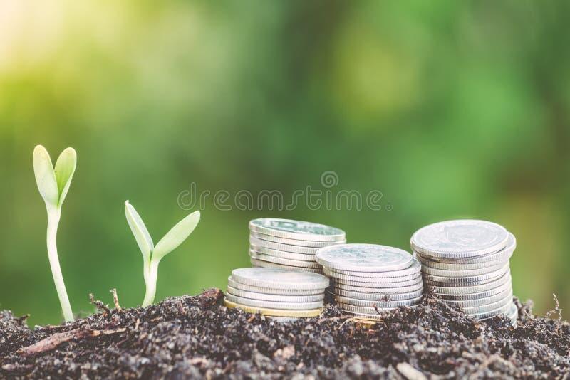 Завод растя из монеток стоковое фото rf