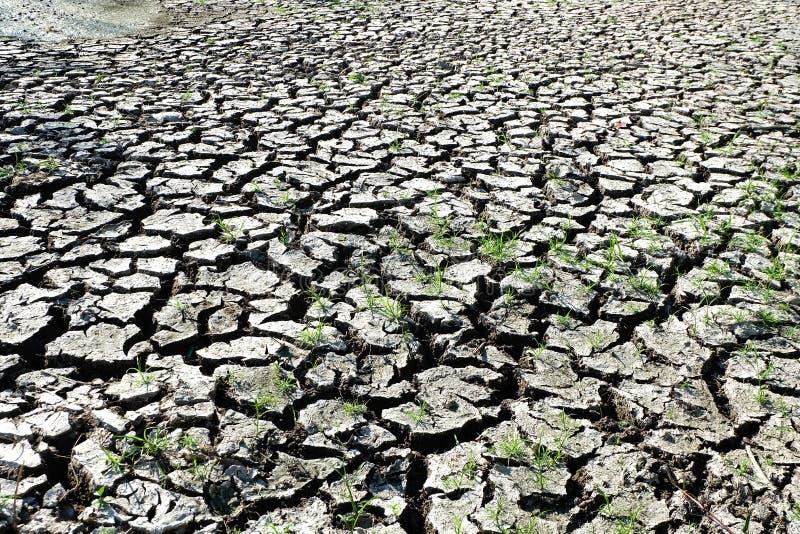 Завод травы на треснутой сухой почве стоковые фотографии rf