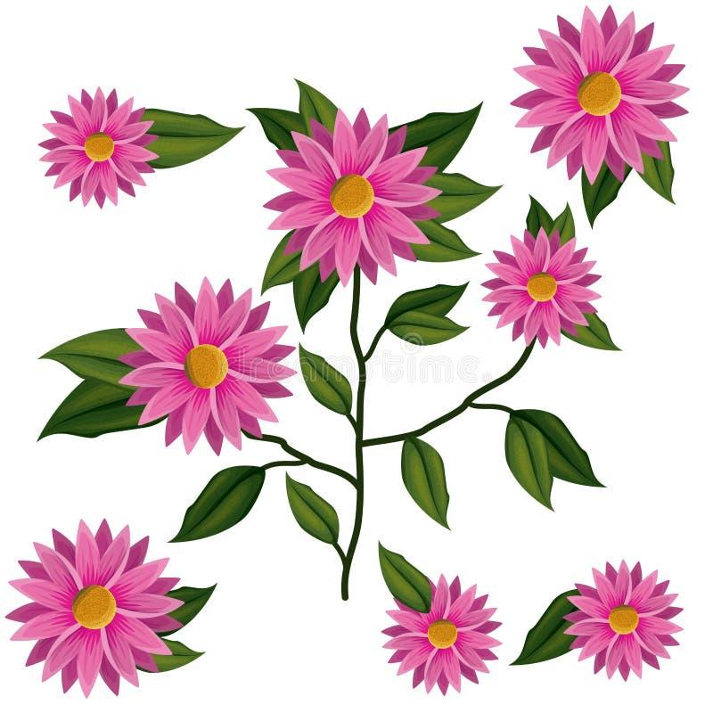 Завод цветка хризантемы в белой предпосылке бесплатная иллюстрация