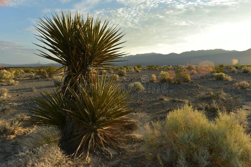Завод юкки против белых и серых облаков в голубом небе над городком ландшафта пустыни Мохаве Pahrump, Невады, США стоковая фотография