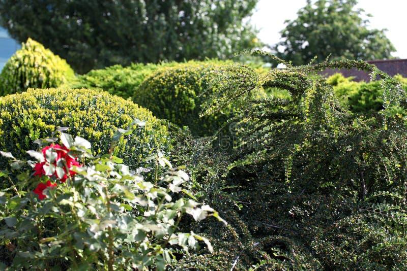 завод bushes стоковое изображение