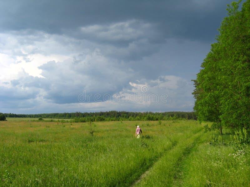 заволакивает лето ландшафта пущи стоковые фото