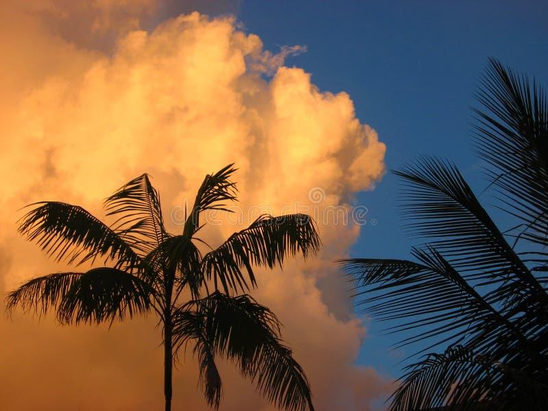 заволакивает пальмы стоковое фото