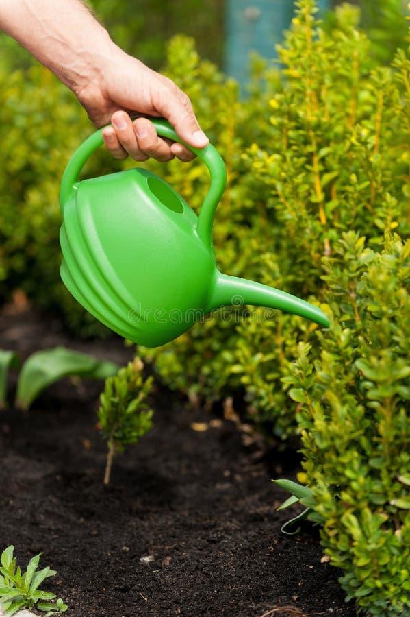 Download Заводам нужна хорошая забота Стоковое Изображение - изображение насчитывающей сад, центр: 40586149
