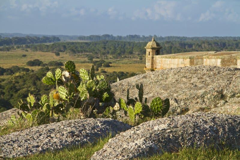 Завод кактуса с крепостью в предпосылке стоковое фото rf