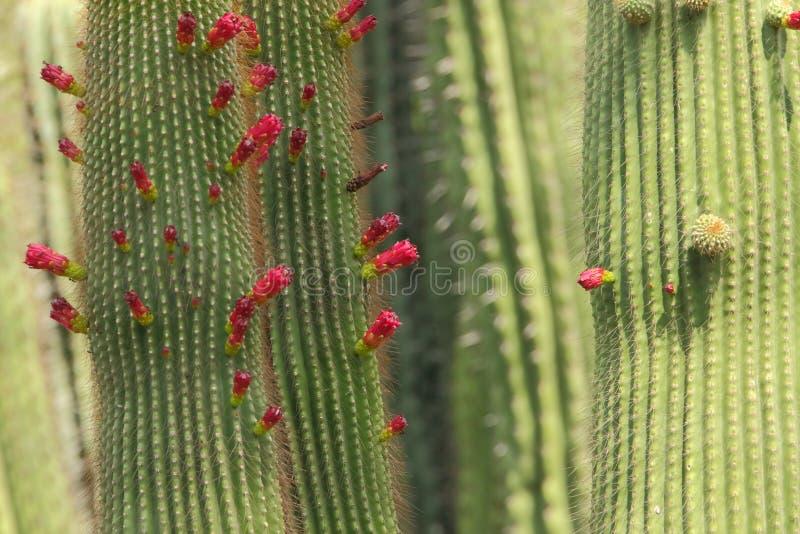 Завод кактуса с цветком стоковые фото
