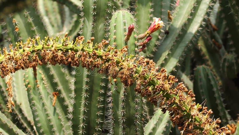 Завод кактуса с цветком стоковое фото