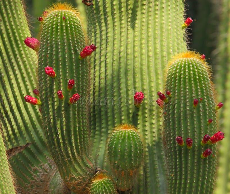 Завод кактуса с цветком стоковое изображение