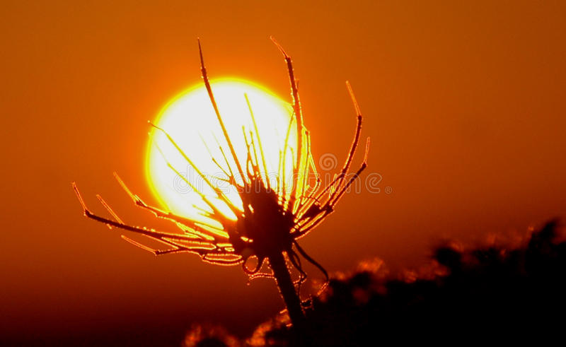 Завод поглощает солнце стоковое фото rf