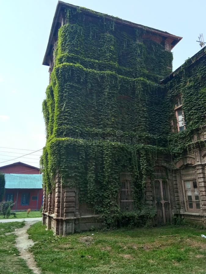 Завод покрыл заведение - долину Здани-Кашмира наследия стоковые изображения rf
