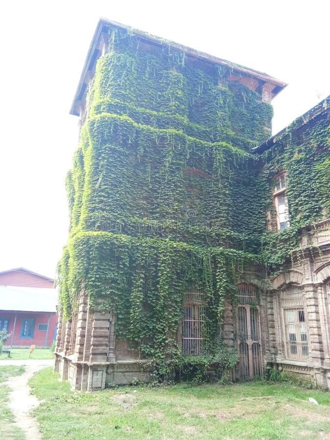 Завод покрыл заведение - долину Здани-Кашмира наследия стоковое фото rf