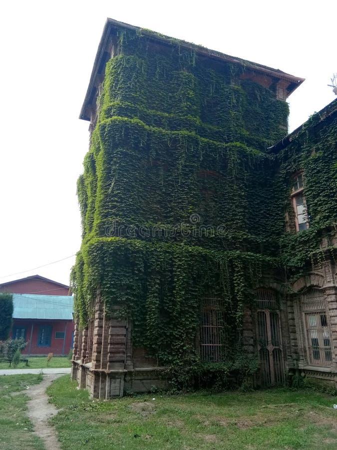 Завод покрыл заведение - долину Здани-Кашмира наследия стоковые фотографии rf