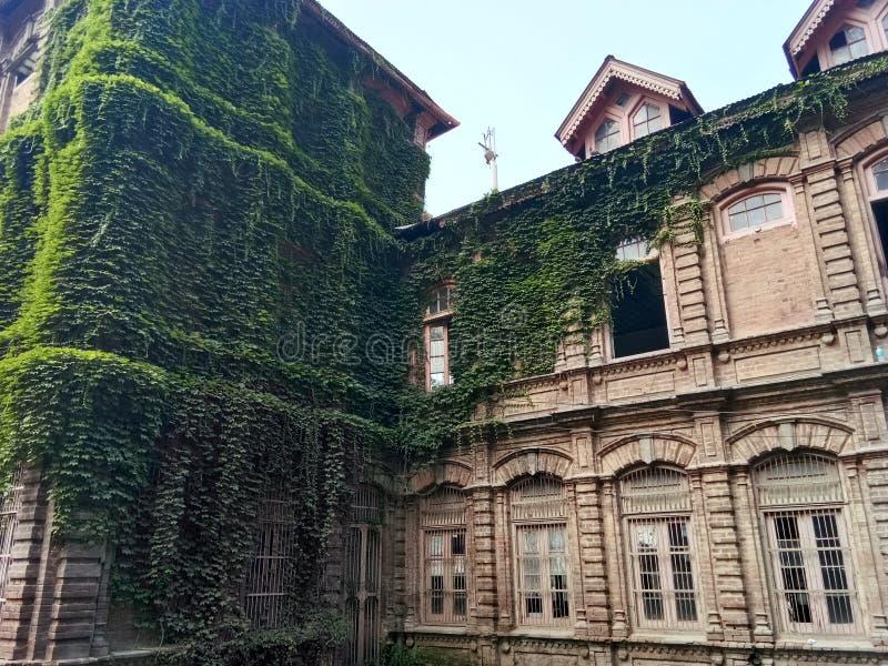Завод покрыл заведение - долину Здани-Кашмира наследия стоковая фотография