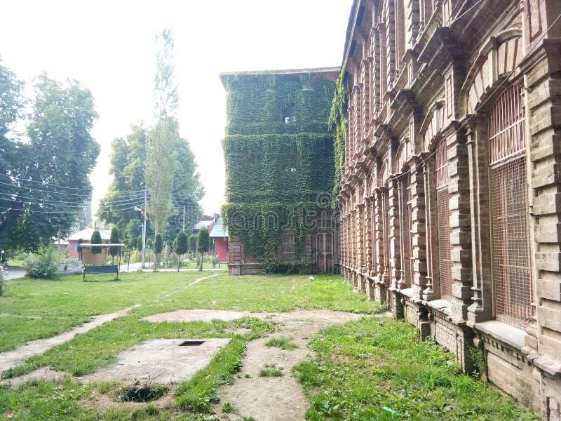 Завод покрыл заведение - долину Здани-Кашмира наследия стоковая фотография rf