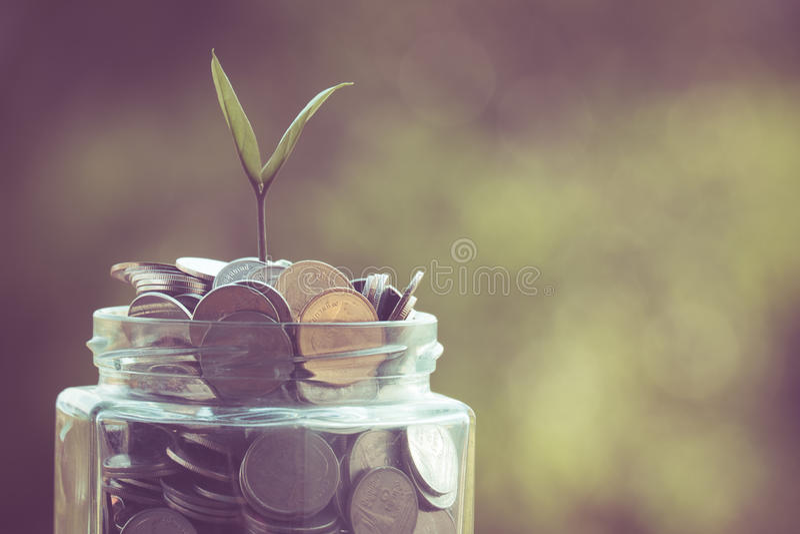 Завод растя из монеток стоковое фото