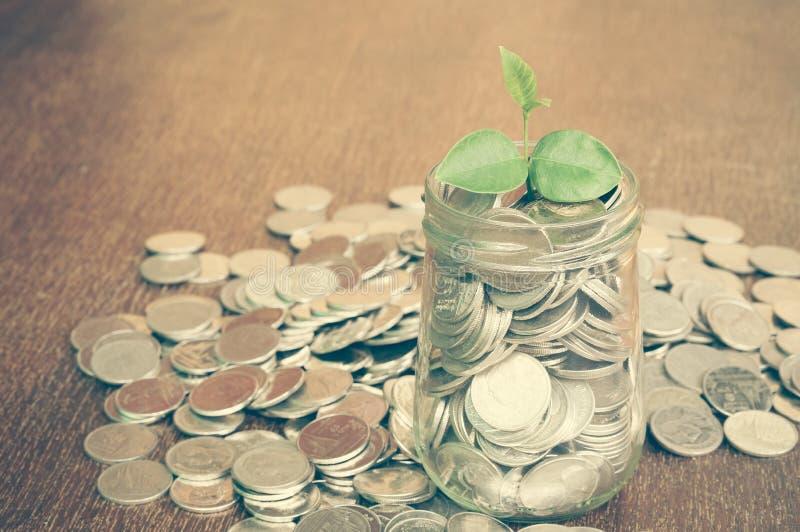 Завод растя из монеток стоковые изображения rf