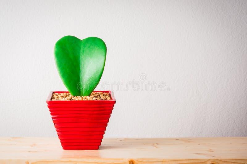 Завод формы сердца стоковое фото rf