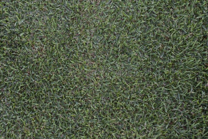Завод фото текстуры предпосылки зеленой травы стоковые изображения