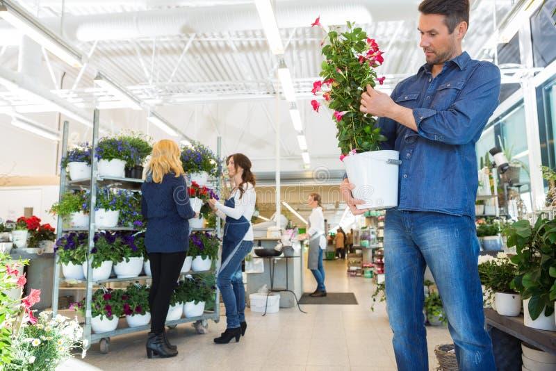 Завод цветка человека рассматривая в магазине стоковая фотография