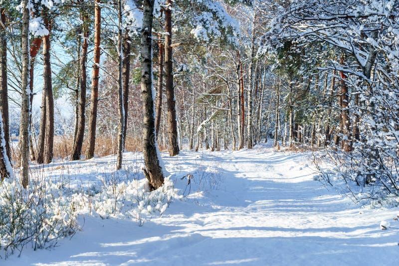 Заводы замерли Snowy, который, лес зимы, солнечное daybackground стоковые изображения rf