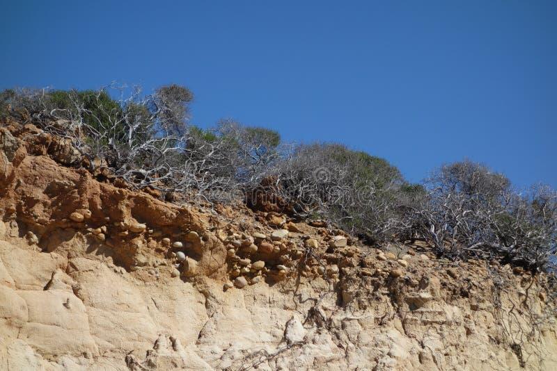 Заводы и песчаник пустыни трясут, запас положения сосен Torrey стоковые фото