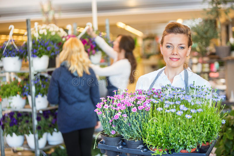 Заводы нося цветка флориста с коллегой стоковые фото