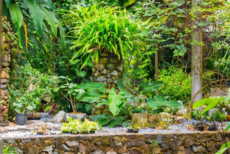 Заводы сада орнаментальные стоковые фото