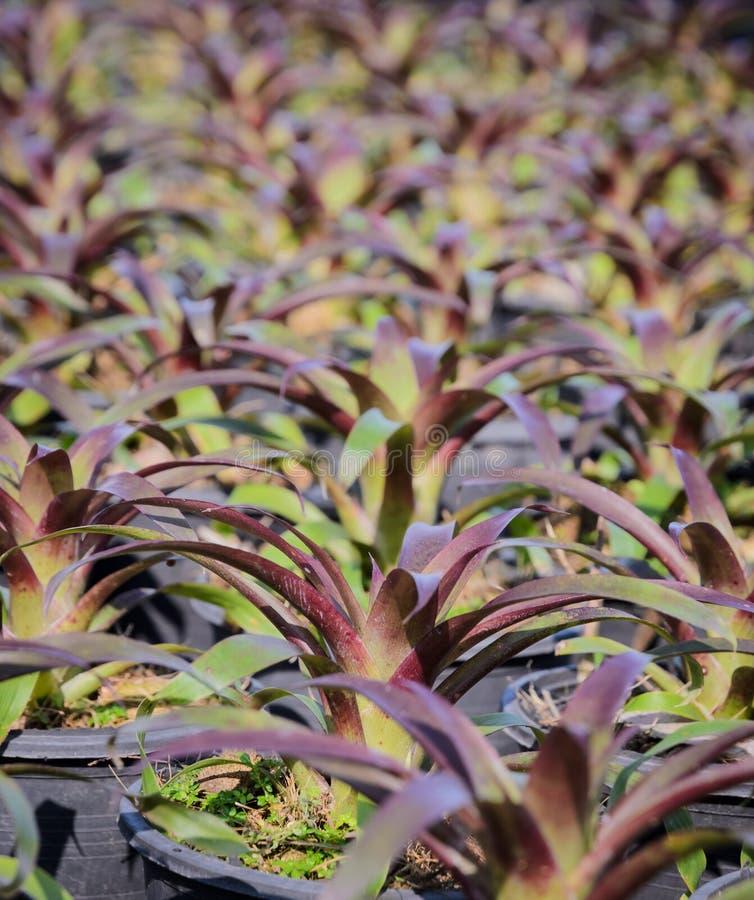 Заводы Bromeliad стоковые изображения