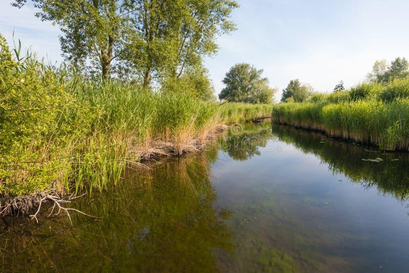 Заводы Reed отраженные в поверхности воды стоковые изображения rf