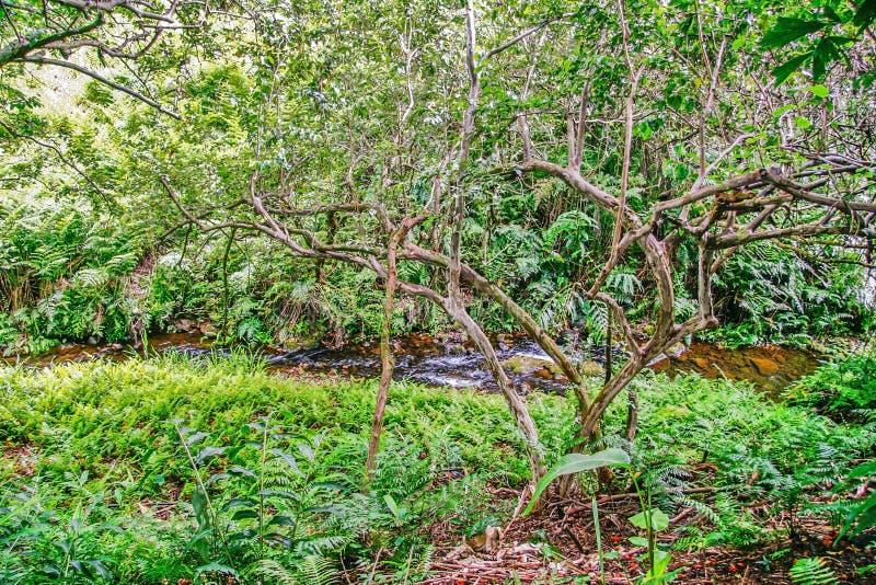 Заводь в джунглях стоковое фото rf