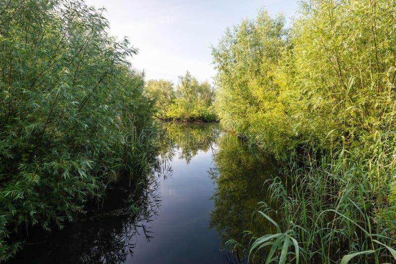 Заводь зеркала ровная в заповеднике стоковое фото rf