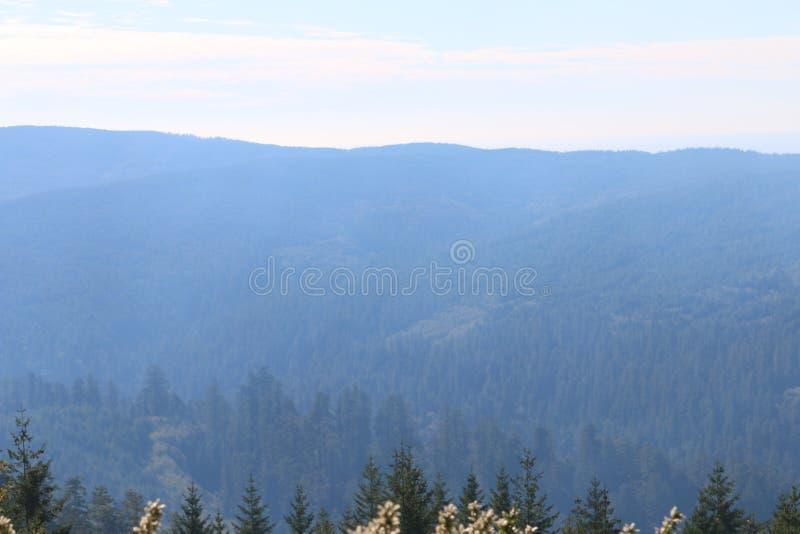 Заводь Redwood обозревает стоковое фото rf