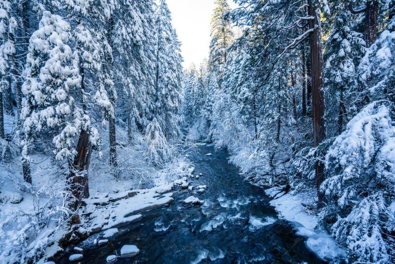 Заводь Snowy стоковое изображение rf