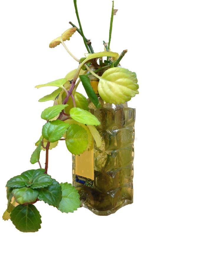 Download завод potted стоковое изображение. изображение насчитывающей очистьте - 40579207