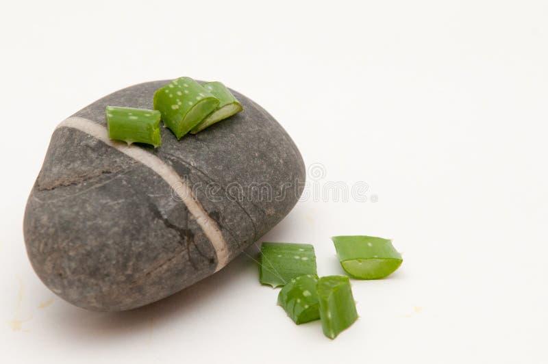 Завод vera алоэ на камне стоковые изображения rf