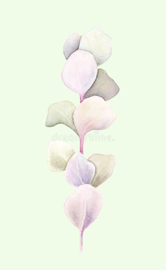 Завтрак-обед евкалипта при листья изолированные на салатовой предпосылке Иллюстрация акварели покрашенная рукой Ботаническое реал иллюстрация вектора