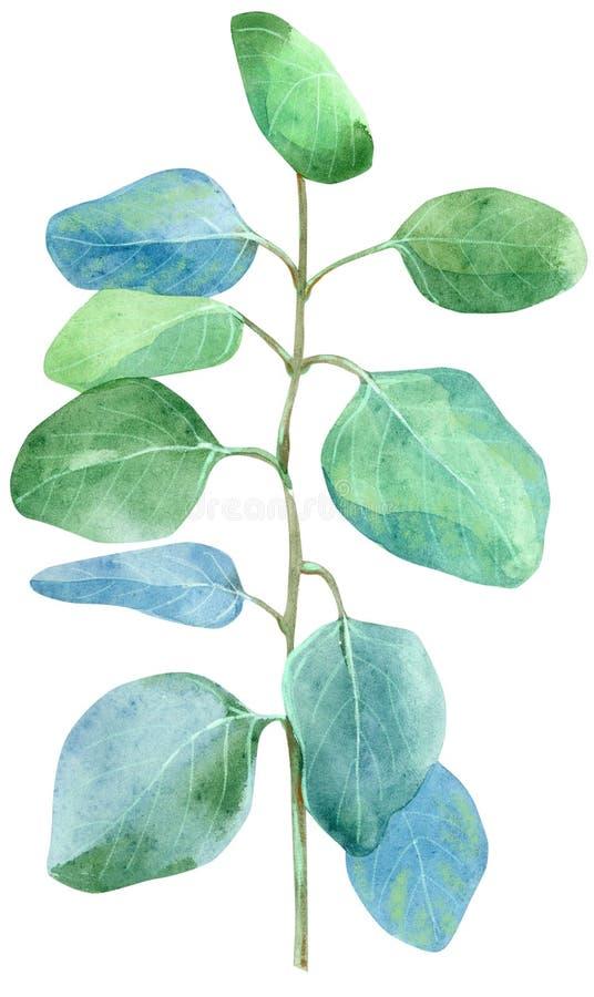 Завтрак-обед зеленого цвета акварели эвкалипта Иллюстрация руки вычерченная изолированная на белой предпосылке иллюстрация вектора