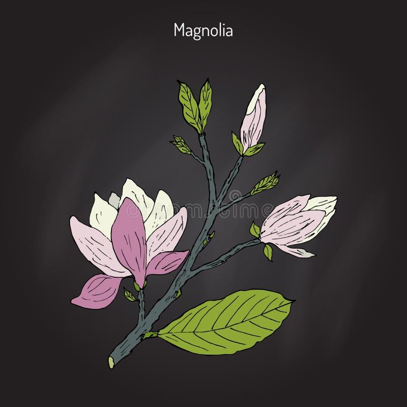 Завтрак-обед цветения магнолии иллюстрация штока