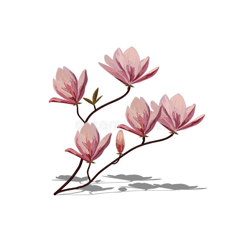 Завтрак-обед цветения розовой магнолии иллюстрация штока