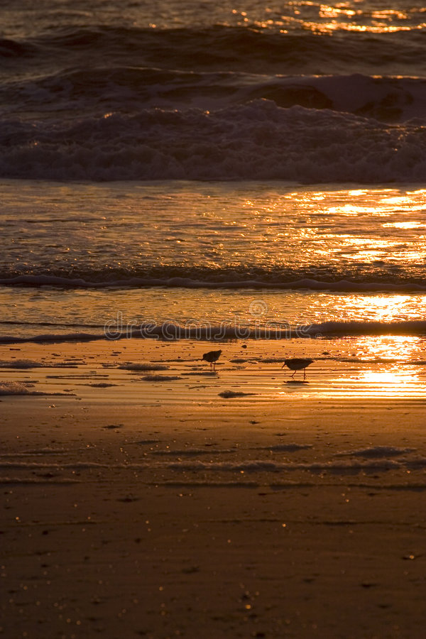 завтрак ii пляжа стоковое фото rf