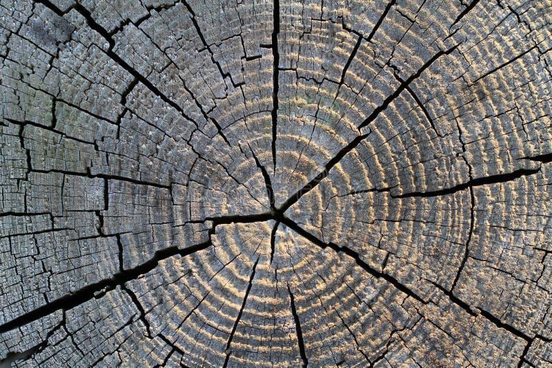 завяжите древесину стоковая фотография rf