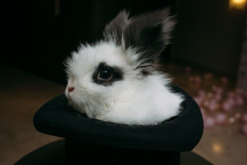 Загадочная шляпа волшебника с кроликом внутрь стоковые фотографии rf