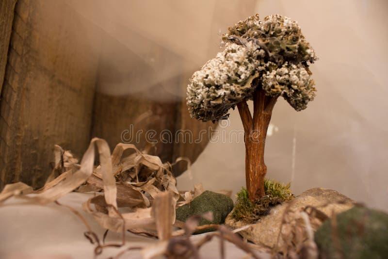 Загадочное дерево от глубин моря стоковые фотографии rf