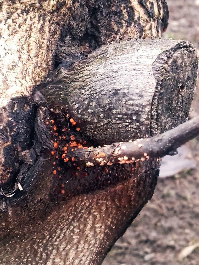 Загадочные жителя дерева стоковые фото
